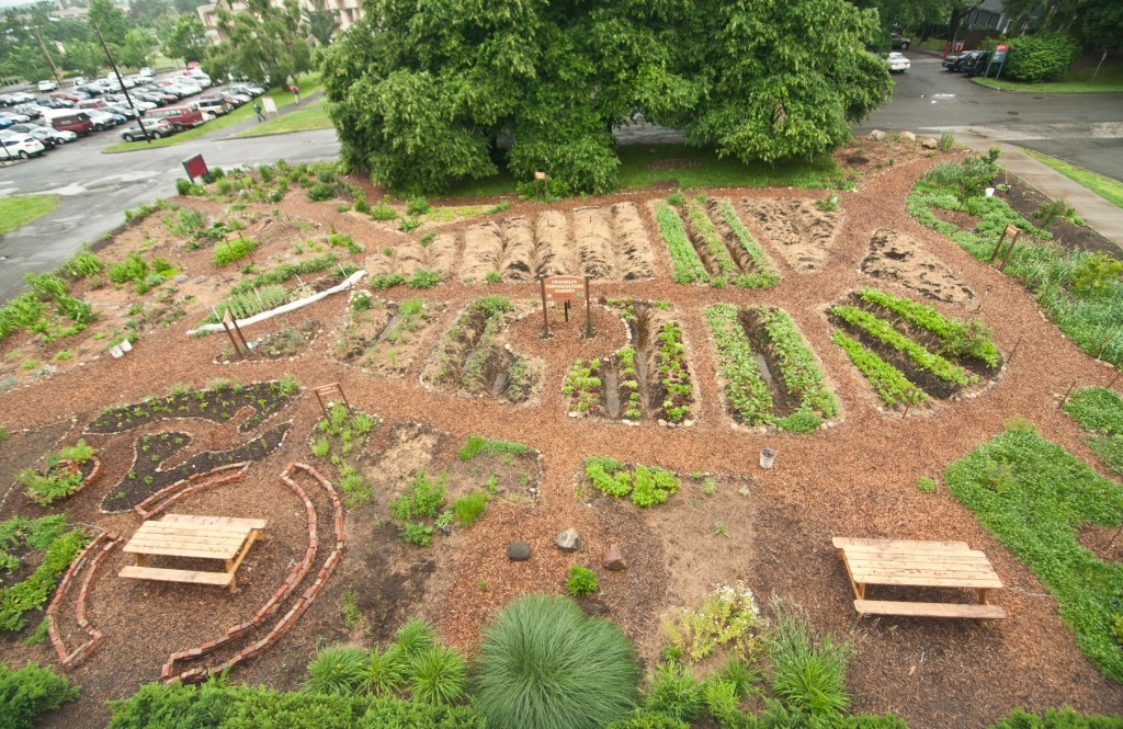 Permaculture ceeds for Permaculture garden designs