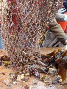 Dredge net