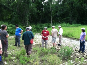 Mill River Invasives scout III