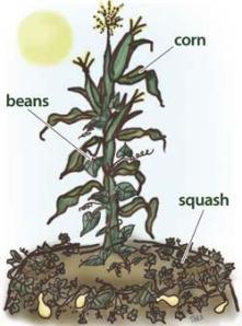 corn_beans_squash