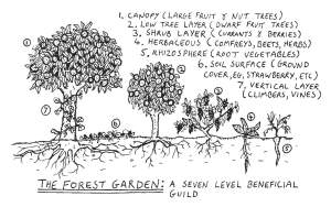 Forest_garden_diagram