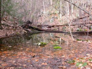 vernal pool - MacLeish