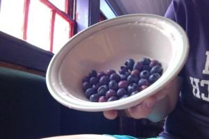 Bluebs_bowl