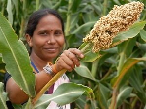 https://www.flickr.com/photos/icrisat/5814411222/in/faves-croptrust/